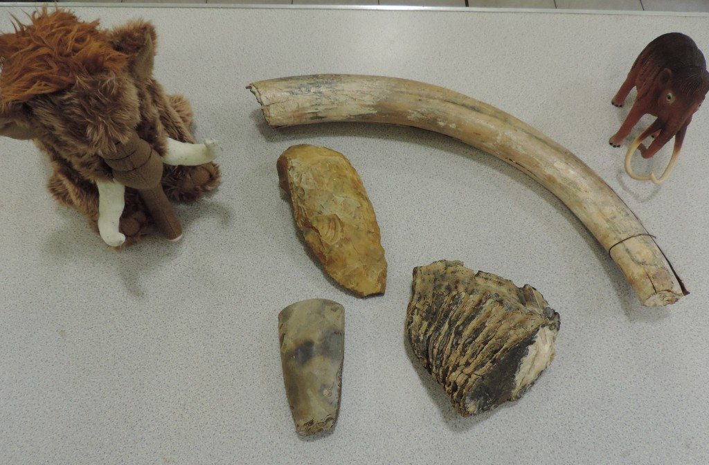 Great Fen Wildllife Watch - Fabulous Fossils