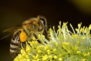 bees_196106