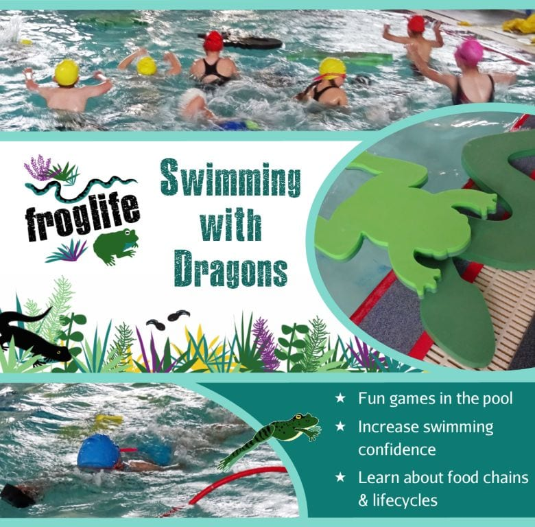 Swimming with Dragons!