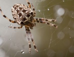 Spooky Spiders - Half Term Family Event